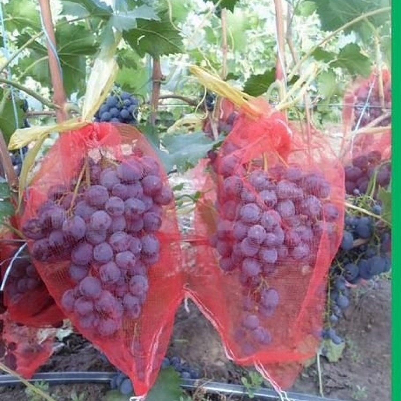 Мешочки для защиты винограда 18х34 с завязками 25шт.